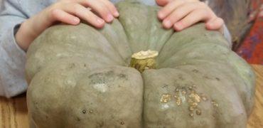 Pumpkins all week long!